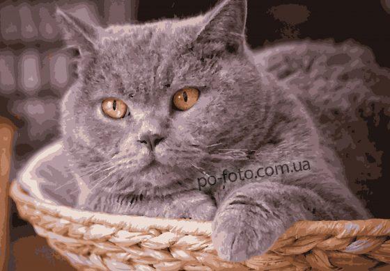 Картины по номерам по фото с животными